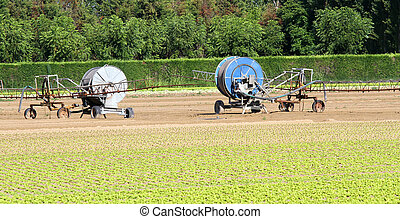 salad field with the intensive irrigation plant 2