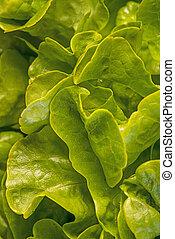 green salad in a closeup