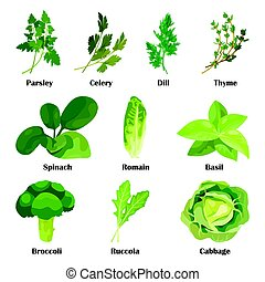 Green salad leaves. Vector vegetarian healthy food leaf set isolated on white