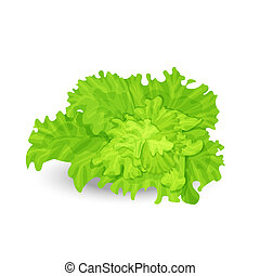 Vector illustration of fresh green salad on the white background