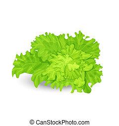 Green salad - Vector illustration of fresh green salad on ...