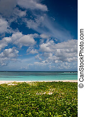 Green sand beach near blue ocean under sky in summer
