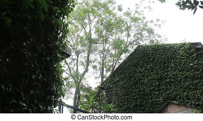 Green scenery of ivy retro house, stock footage