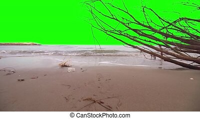 Green screen instead of the sky over the sea with a tree...