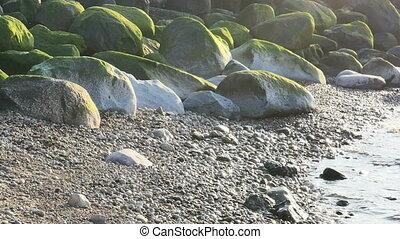 Green sea grass on stones