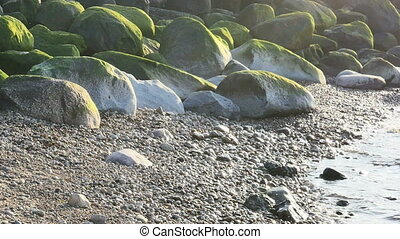Green sea grass on stones