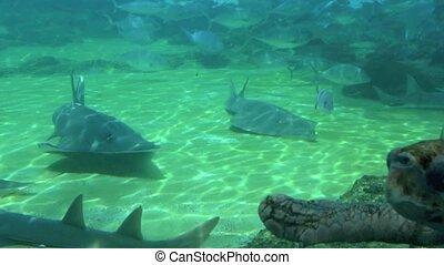 Green sea turtle Australia - Green sea turtle in Sea World...