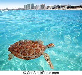 Green sea Turtle Caribbean sea surface Cancun Mexico...
