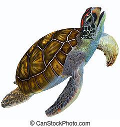 Green Sea Turtle Profile - The Green Sea Turtle is...