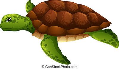 Green sea turtle white background