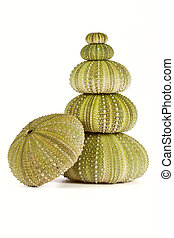 Green sea urchins stacked shells on white background