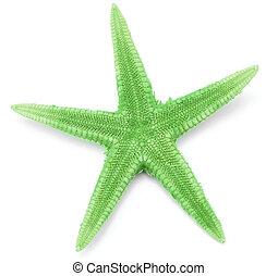 Green seastar
