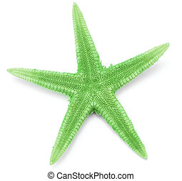 Green seastar, isolated on white background