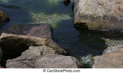 green seaweed with stones in sea
