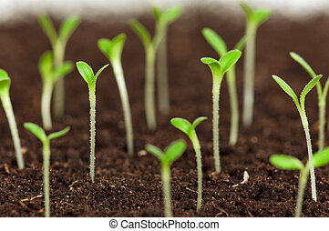 Green seedling - Close-up of green seedling growing out of ...