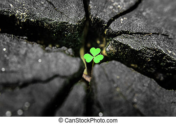 Green seedling growing from tree st