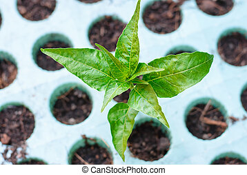 Green seedling growing out of soil