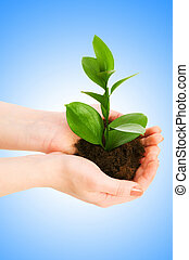 Green seedling in hand isolated on white