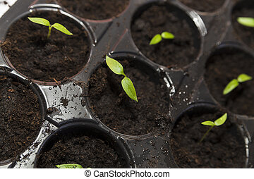 Green seedling on tray close up
