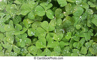 Green shamrock background with water drops