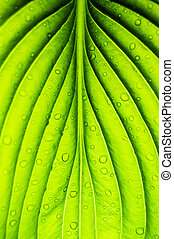 sheet - green sheet background with raindrops
