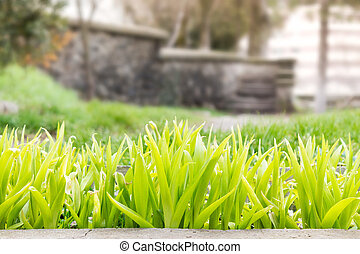 green shoots infront of old steps - green shoots of flowers...