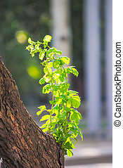 Green shoots on a tree trunk