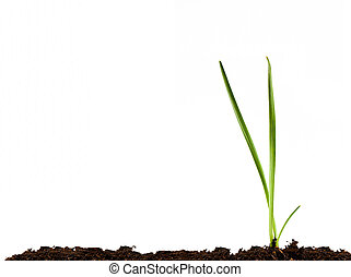 Green shoots on white background
