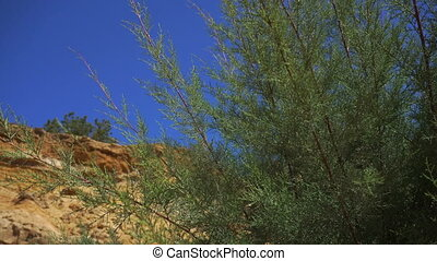 Green shrub near sand stones and blue sky - Green shrub near...