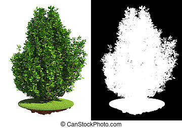 Green Shrub Isolated on White Background with Detail Raster Mask.