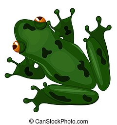 Green sitting frog isolated on white background. Vector image.