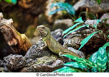 Green skin lizard looking. A beautiful Lizard