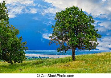 green sky tree oak field landscape grass blue nature environment horizon meadow summer