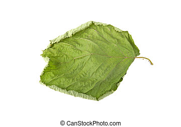 green sluggish leaf isolated on white background