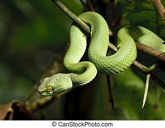 Green snake in rain forest