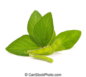 Green soy pods with leaves.