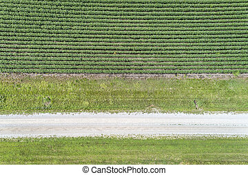 green soybean field aerial view