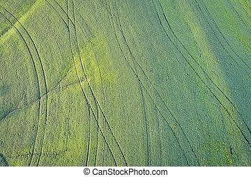 green soybean fields aerial view