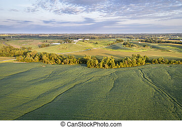 green soybean fields and meadows aerial view