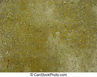 green speckled dirty mossy worn wall
