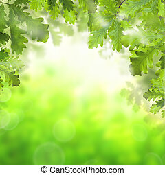 Green spring background with green oak leaves