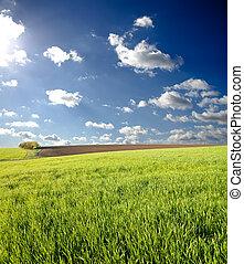 green spring field under deep blue sky