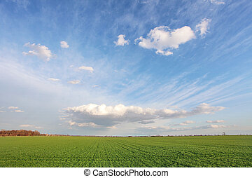 Green spring field with blue sky