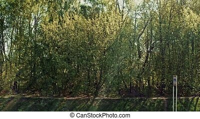 Green Spring Forest on riverbank. - Green Spring Forest on...