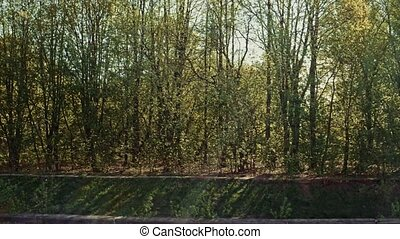 Green Spring Forest on riverbank view from boat - Green...