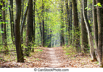 Green spring forest with first spring leaves and path