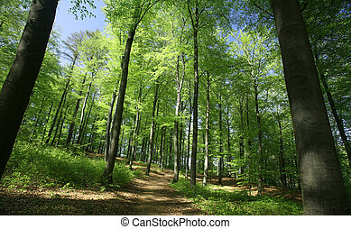 green spring landscape with green trees in the danish country side