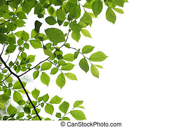 Green spring leaves on white background