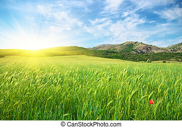 Green spring meadow in mountain.