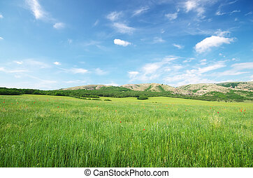 Green spring meadow in mountain